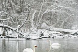 Fotografia_ptaków_038 38