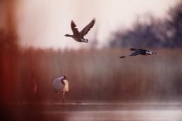 Fotografia_ptaków_123 123
